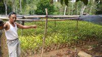 Deretan Peluang Usaha di Desa yang Menjanjikan