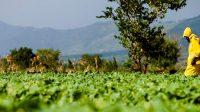 Usaha Bidang Pertanian Paling Menjanjikan Saat Ini