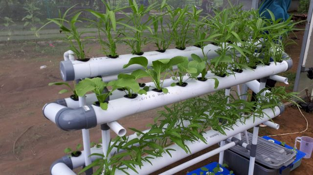 Modal Awal Bisnis Tanaman Hidroponik Yang Sangat Menguntungkan